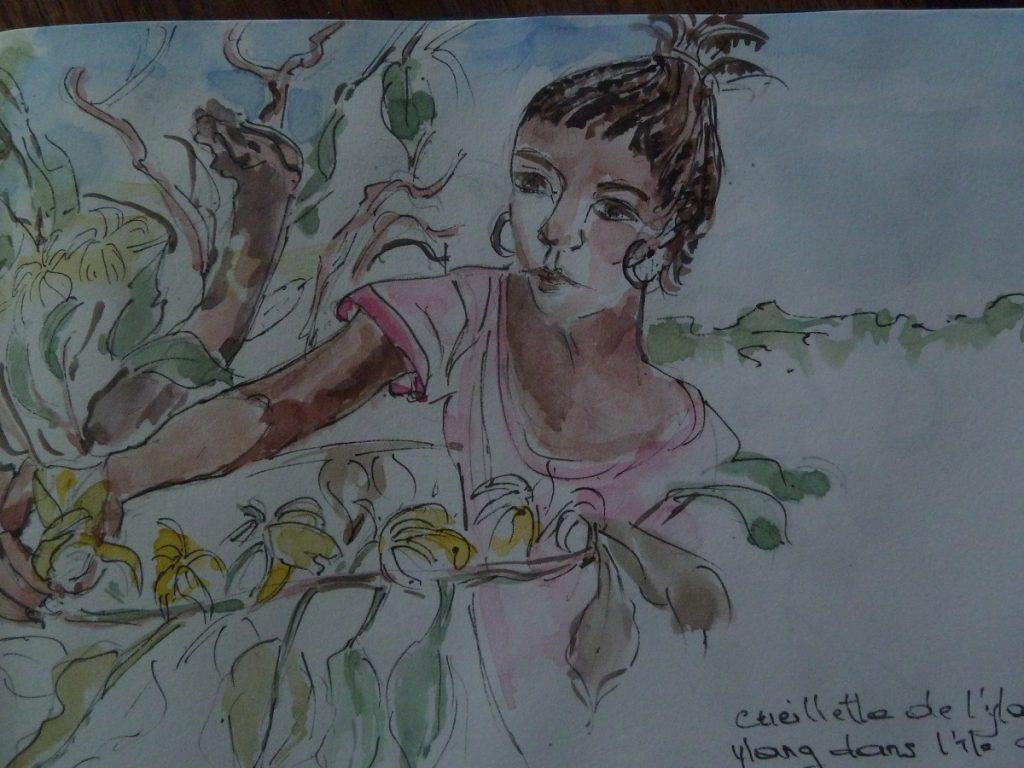 "Culture de l'Ylang Ylang sur l'îles des parfums ""Nosy Be"""