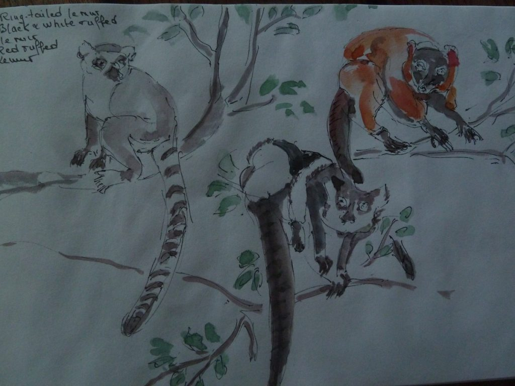 Sur la belle île de Nosy Komba, jouez avec les lémuriens et approchez-les en les caressant !